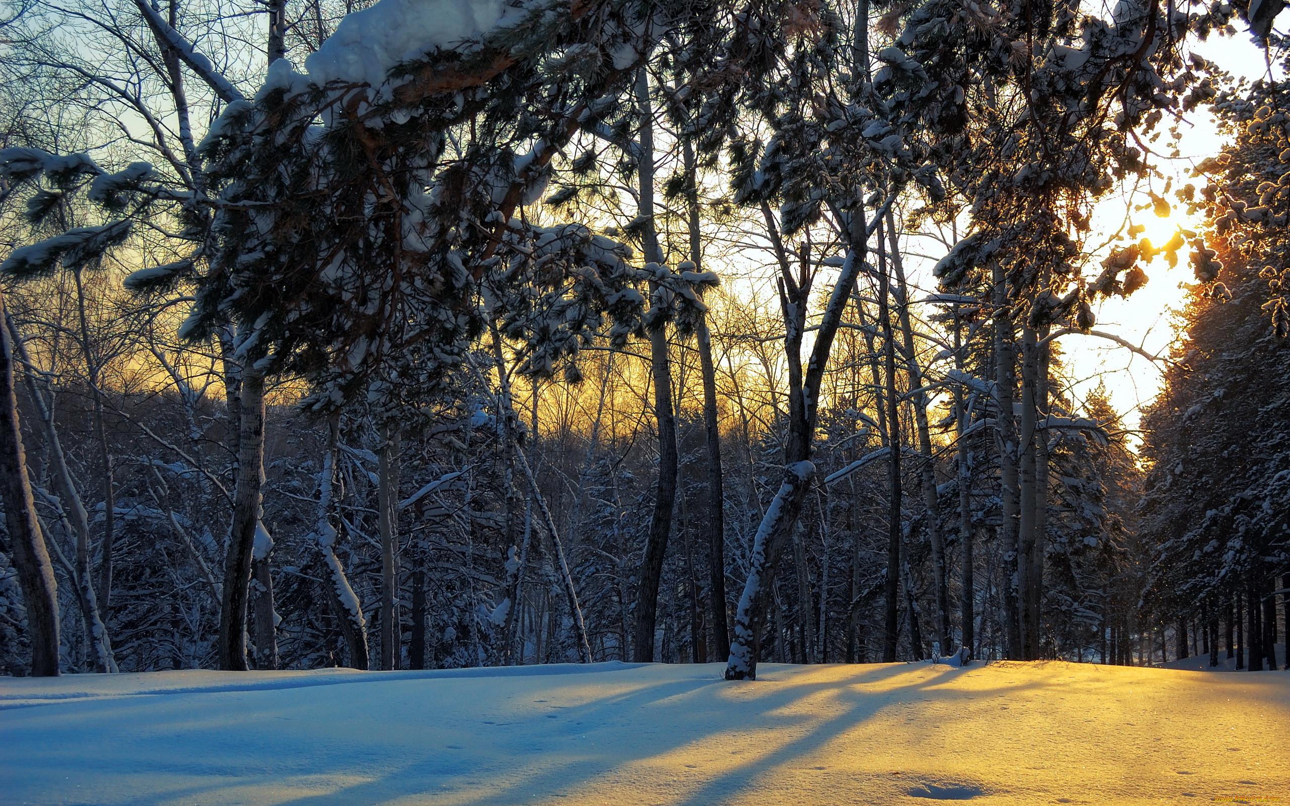 картинка зимней лесной поляны бразилии